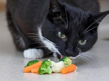 Коты любят оливки - причины, можно ли давать