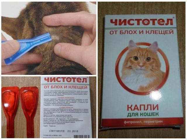 Шампунь чистотел для кошек - состав и особенности применения