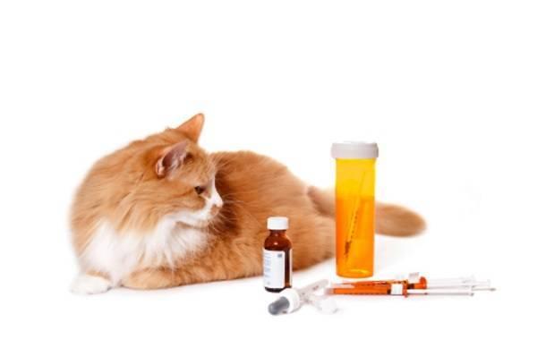 Бисептол для кошек - инструкция по применению, дозировка