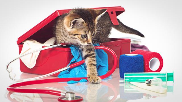 9 причин почему кошка не ест, только пьет воду и спит