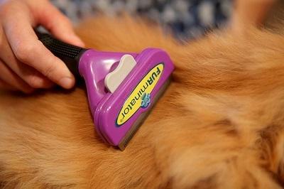 Расческа для кошек фурминатор - как вибрать и правила пользования