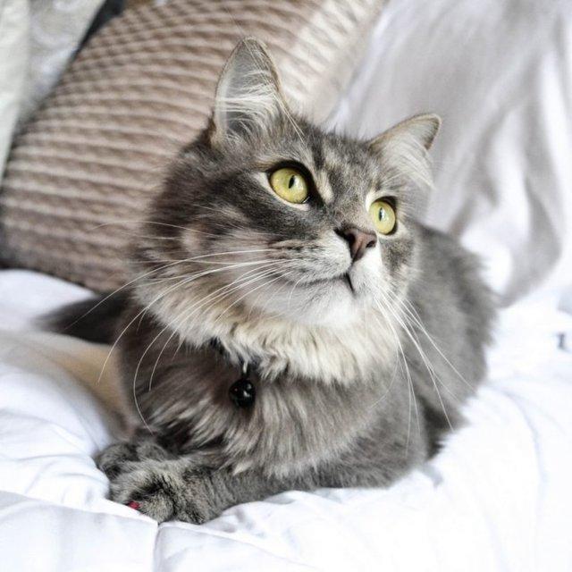 Альбен С для кошек - инструкция по применению препарата