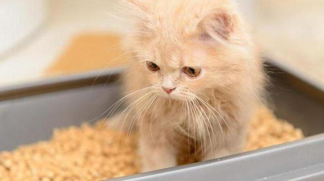 Линекс для кошек - как давать при поносе