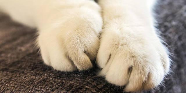 Сколько когтей у кошки на всех лапах?