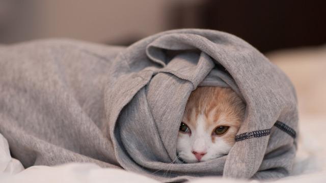7 причин почему котенок часто дышит
