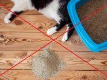 Как быстро приучить котенка к лотку без наполнителя