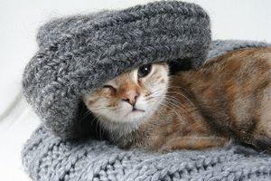 Кошка во сне мяукает - причины и что делать