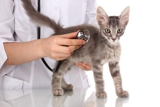 Можно ли давать коту валерьянку для успокоения