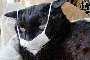 Кот заболел - что делать и как лечить