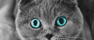 Канефрон для кошек - инструкция по применению