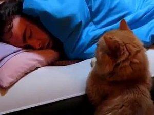 Котенок не дает спать ночью - что делать, причины