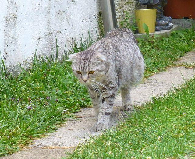 ТОП 13 причин водянки у кота: что делать