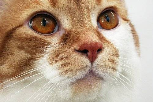Кот чихает и сопли что делать и чем помочь