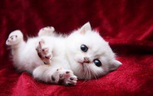 Квамател для кошек: инструкция по применению