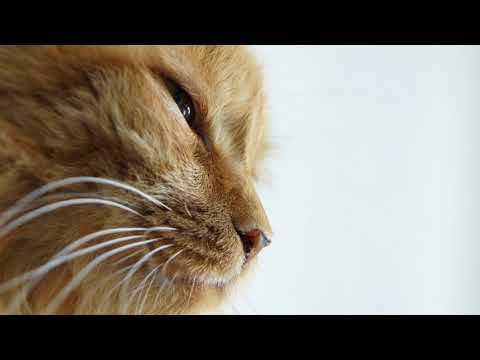 4 причины почему у кошки горячие лапы - что делать