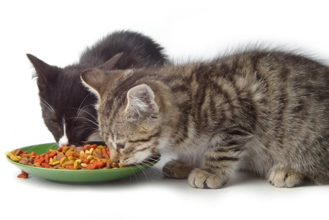Как приучить котенка есть сухой корм - основные правила