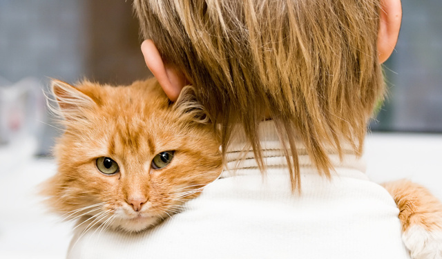 Аллергия на кошек у детей симптомы и лечение
