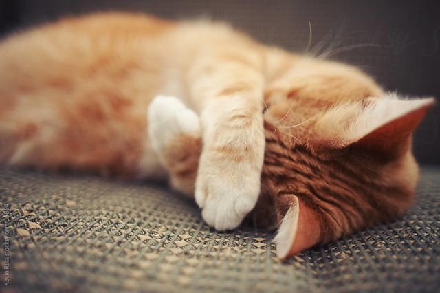 Средство от запаха мочи кошек - список и описание
