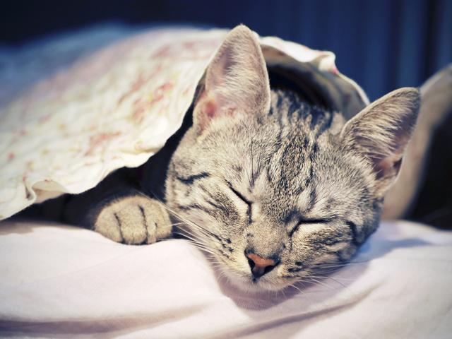 Побочные эффекты прививки от бешенства кошке