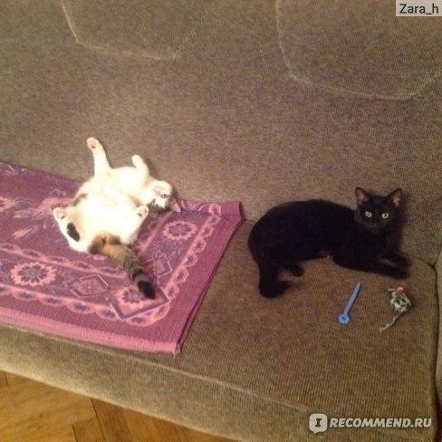 Левомеколь для кошек: инструкция по применению