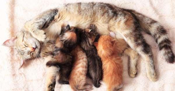 Кошка шипит на котенка - причины и что делать