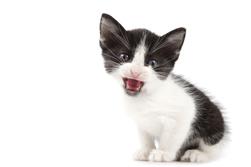 Котенок хочет в туалет - как понять и признаки
