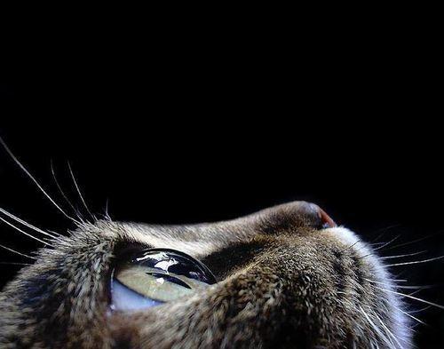 Кошка чихает и слезятся глаза - что делать хозяину