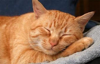 Как назвать рыжего котенка мальчика - красивые имена