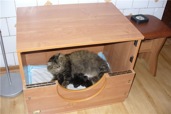 cколько времени кошка ходит беременная
