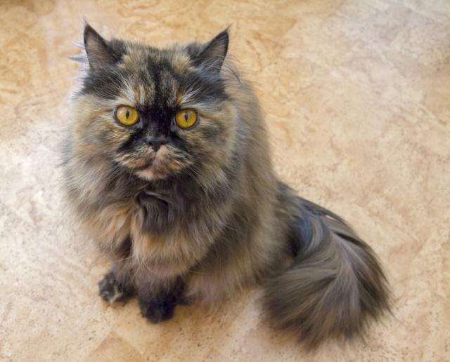 Японские имена для котов и кошет - ТОП имен