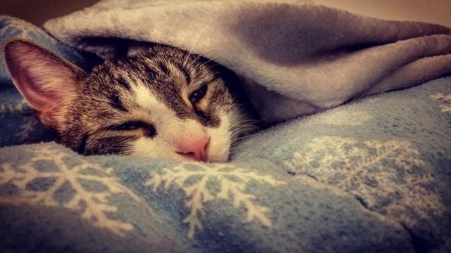 7 симптомов отравления кота крысиным ядом - лечение
