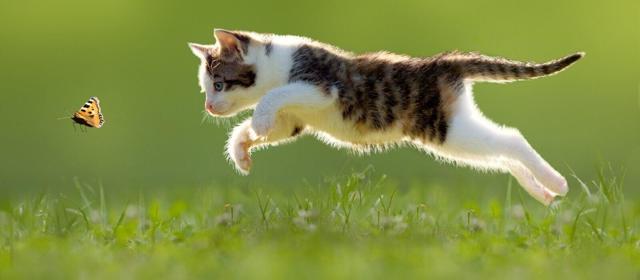 Кот гуляет - что делать владельцу