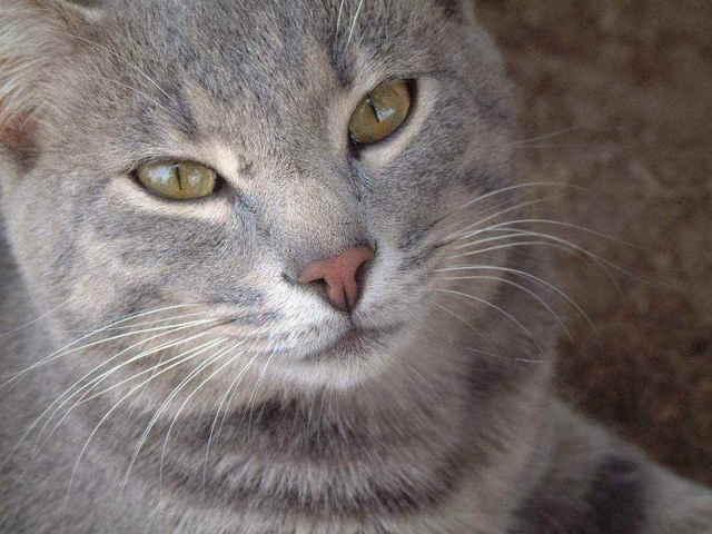 Кот простыл - что делать вадельцу и чем лечить