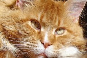 10 причин почему у кошки кровь из заднего прохода - лечение