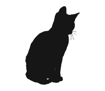 У кошки из-под хвоста кровь - 7 причин и что делать?