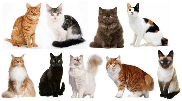 Сколько кошка вынашивает котят по времени в животе