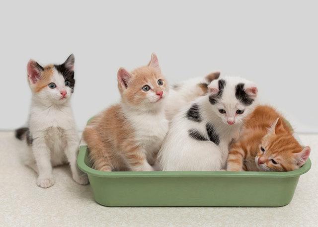 cиликагелевый наполнитель для кошек - плюсы и минусы