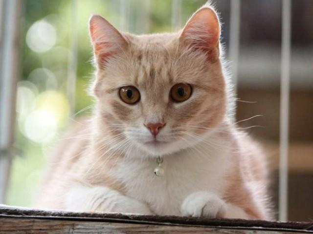 7 симптомов отека легких у кошек - как лечить