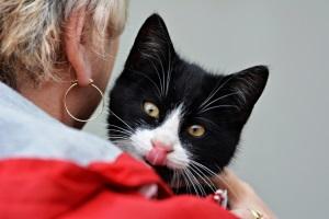 У ребенка аллергия на кошку - что делать и как помочь малышу
