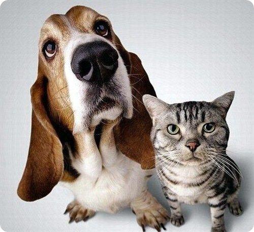 ТОП 5 причин, почему кошки боятся собак