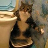 Кот не может пописать - что делать, причины и как помощь?