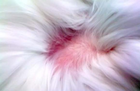 6 причин почему у кота выпадает шерсть на животе