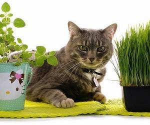Фолиевая кислота кошке - инструкция по применению препарата