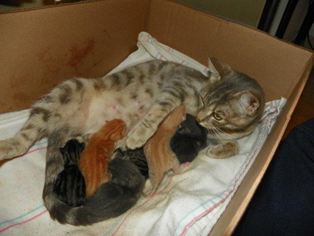 Замершая беременность у кошки: почему и что делать