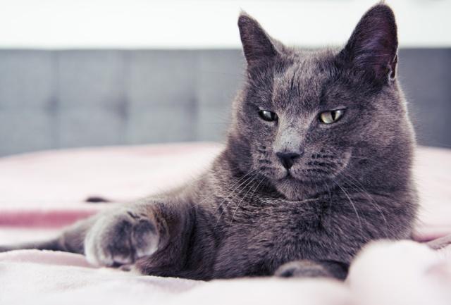 У кошки шишка на холке - что делать