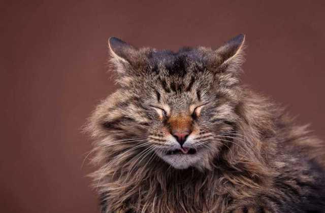 Полынь от блох у кошки - как применять