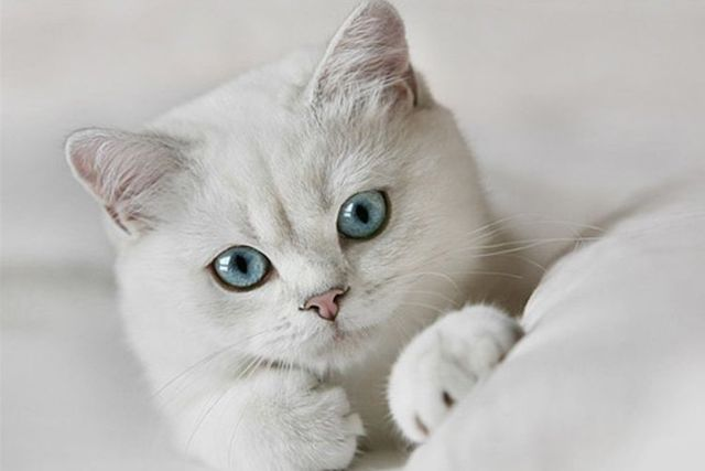 Красивые имена для котов мальчиков - редкие и запоминающиеся