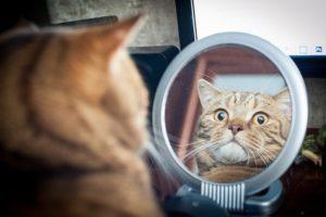 Видят ли кошки себя в зеркале