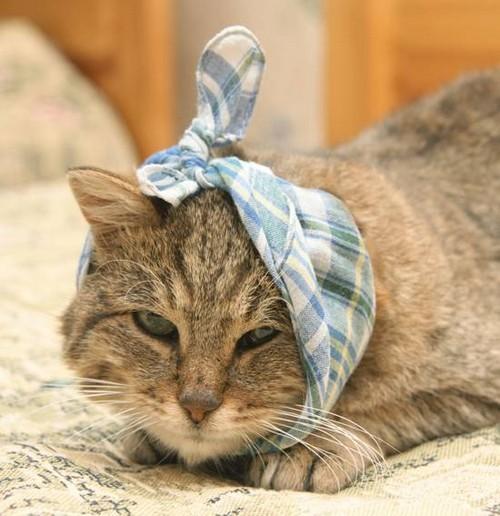Рана у кошки на шее - чем обработать