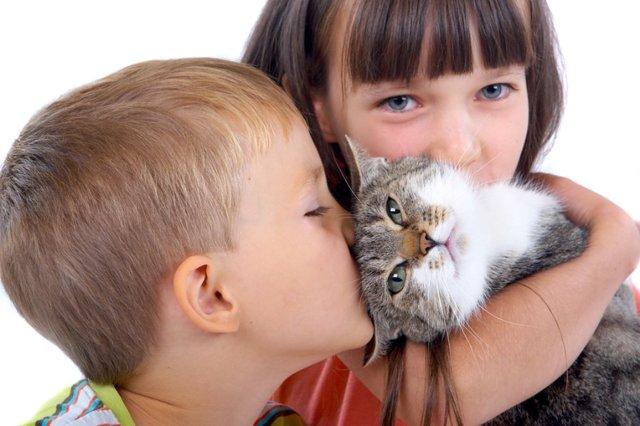 Чем полезны кошки для человека - психологическая польза
